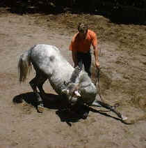 horse training in Monteverde