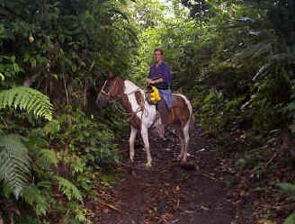 horseback riding in the jungle of Costa Rica