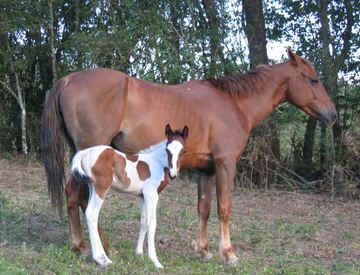 Best horses in Monteverde Costa Rica