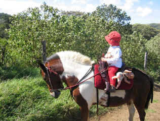 Pony horseback riding for children in Monteverde Costa rica